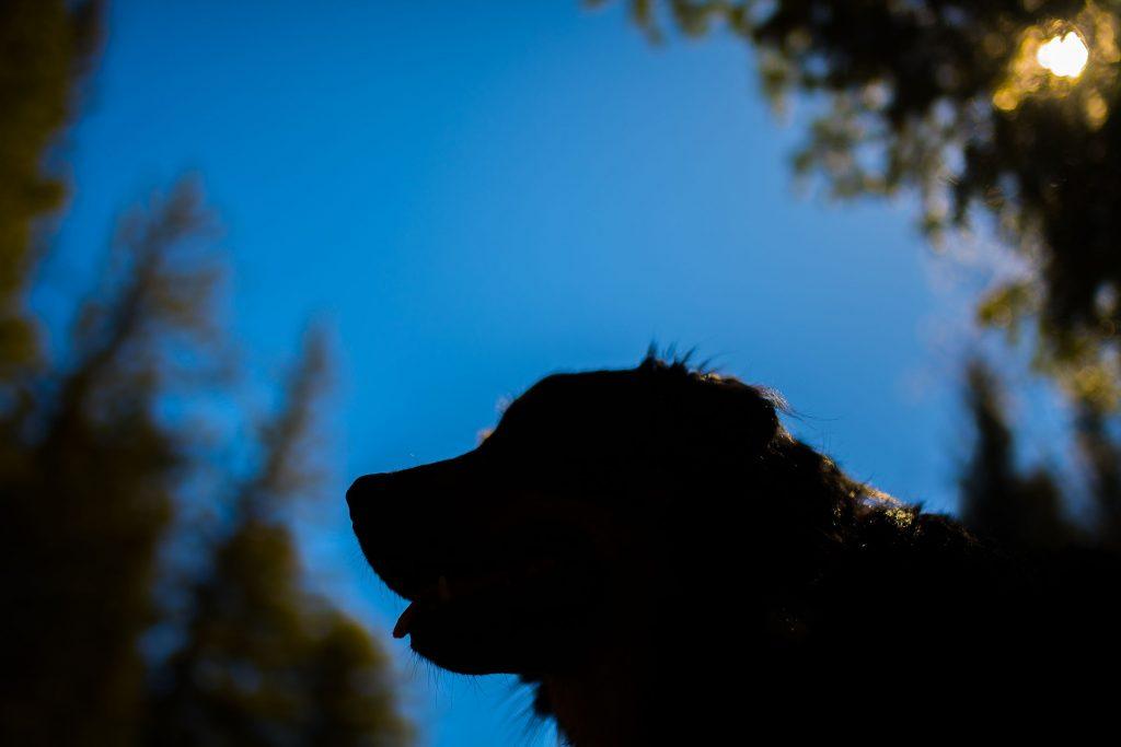boulder pet portraits with kristen kidd photography