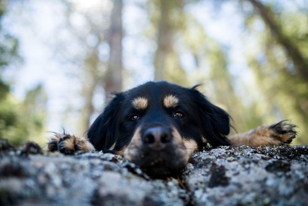 boulder colorado dog photographer