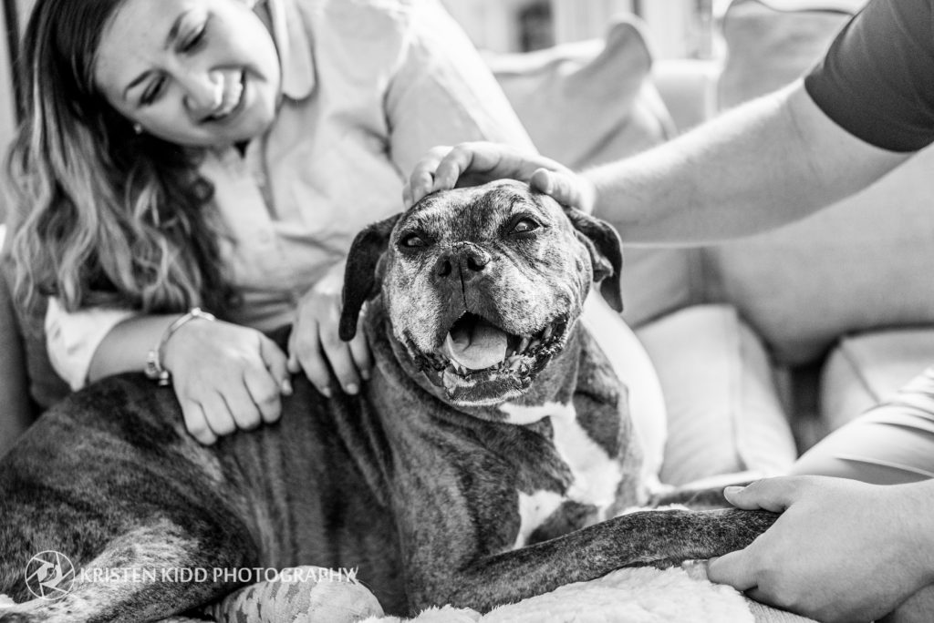 pet family photo session with kristen kidd photography